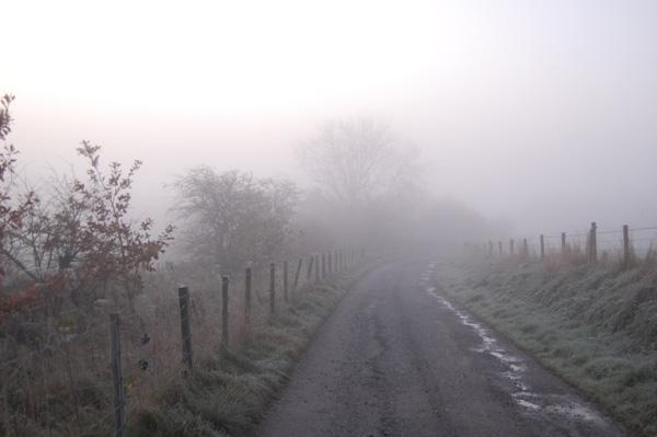 Mist shrouded lane