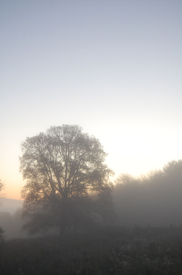 A tree in mist