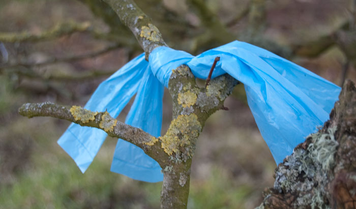 treecrap4