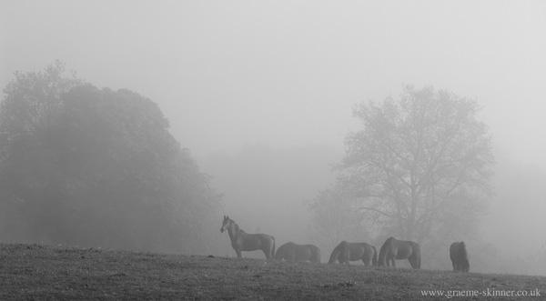 horses_mist_600