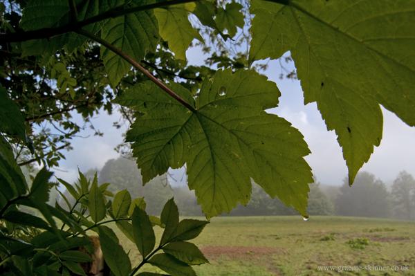 leaf1_600