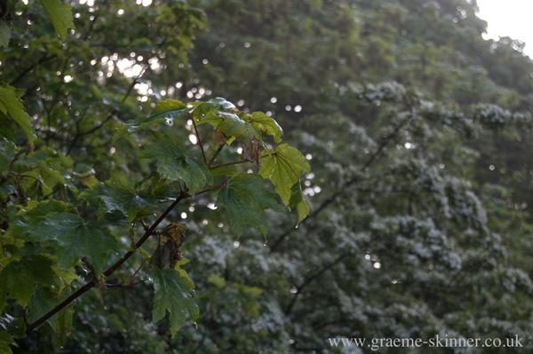 leaf3_600