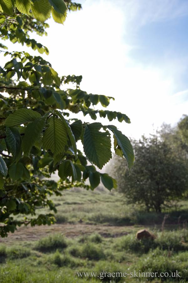 leaf5_600