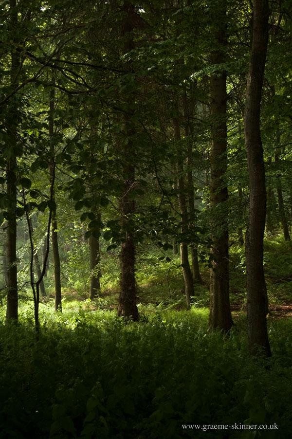 trees2_600