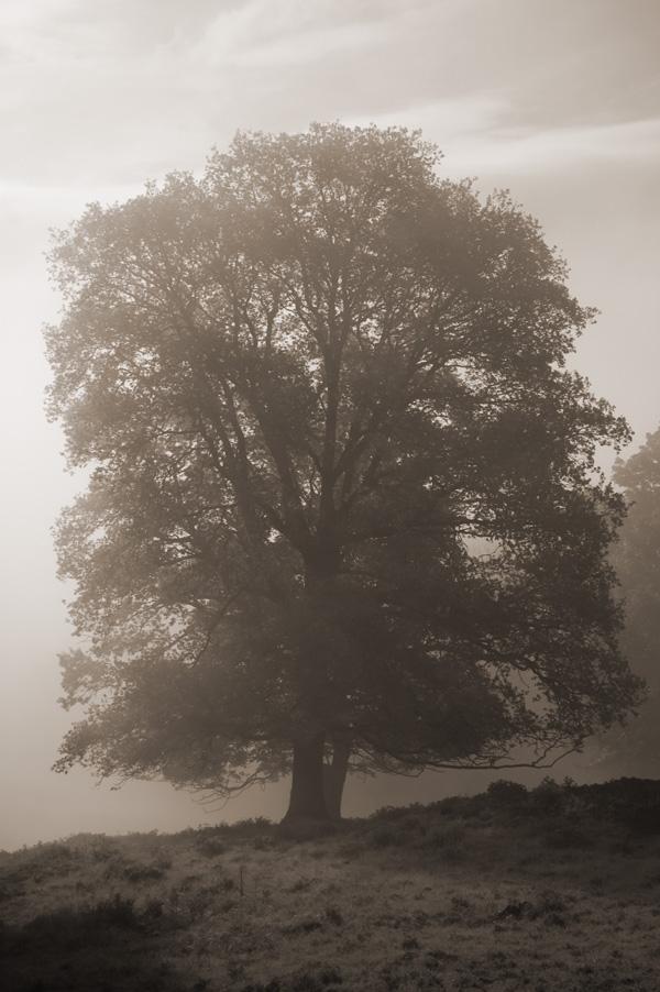 trees3_600