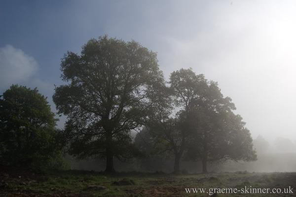 trees4_600