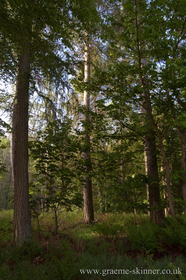 trees5_600