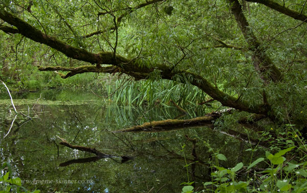 wild_pond600
