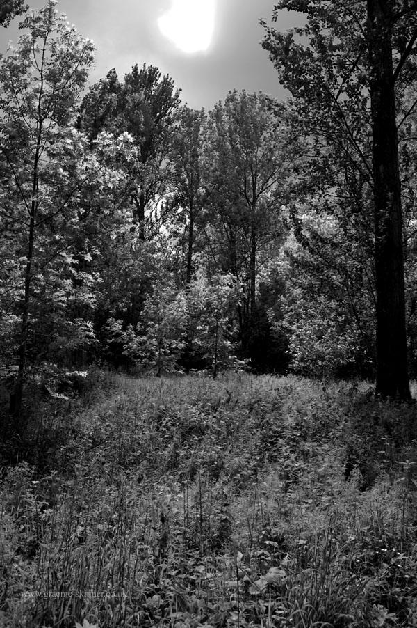 wood_infra2600