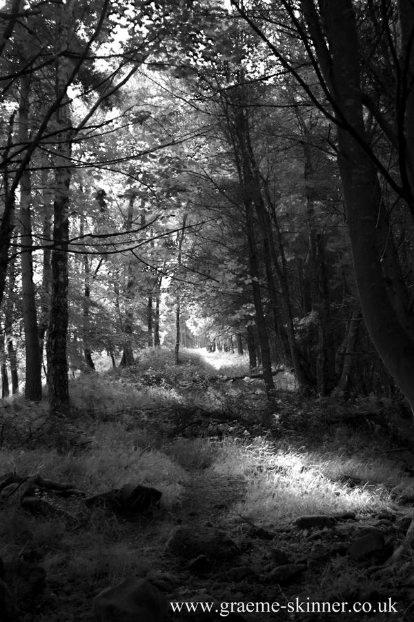 wood_infra_600