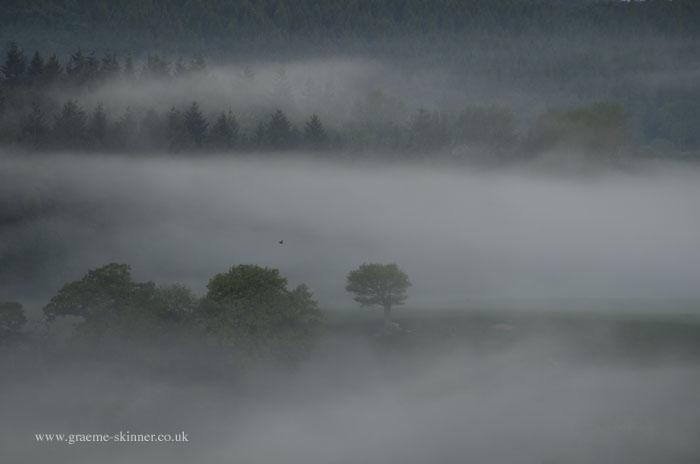 Mist Filled Valley IV