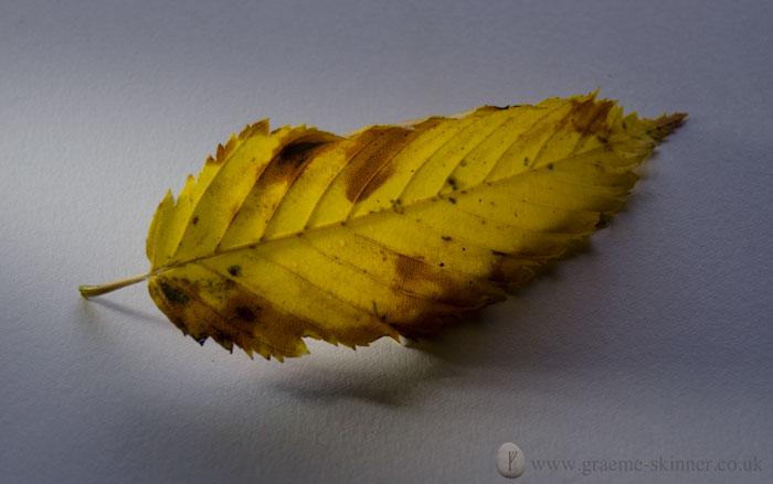 leaf1_700