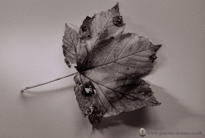 leaf2_700