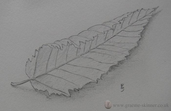 leaf4_700