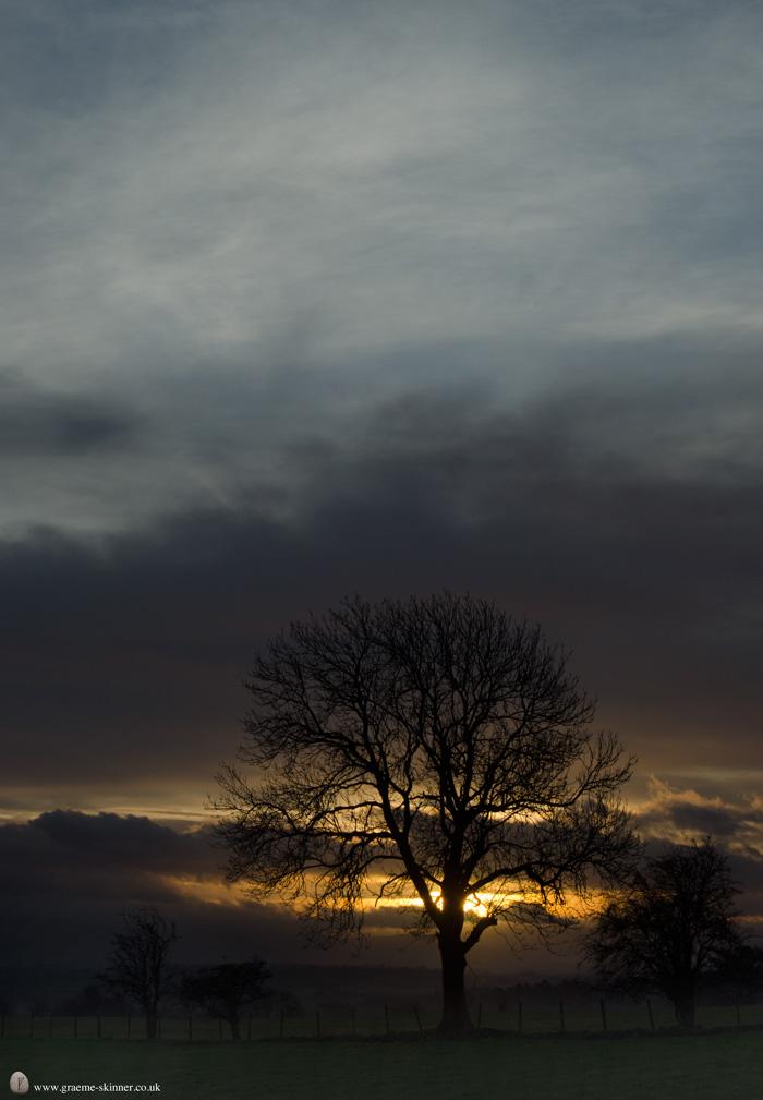 Dawn & Tree
