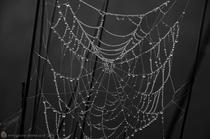 Another Web ;-)
