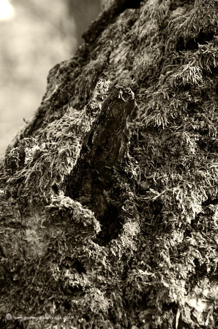 Tree detail II