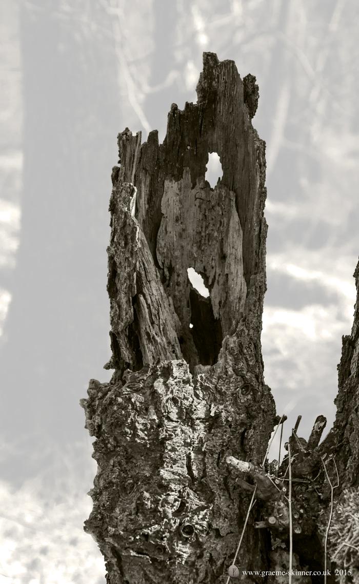 Tree detail III