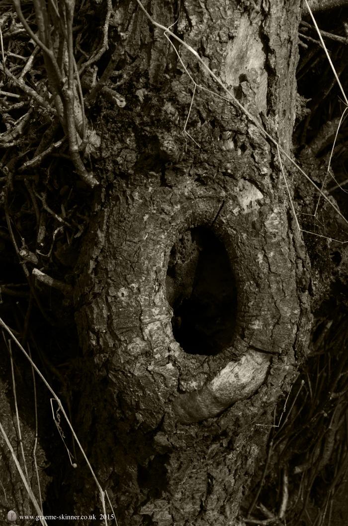 Tree detail IV