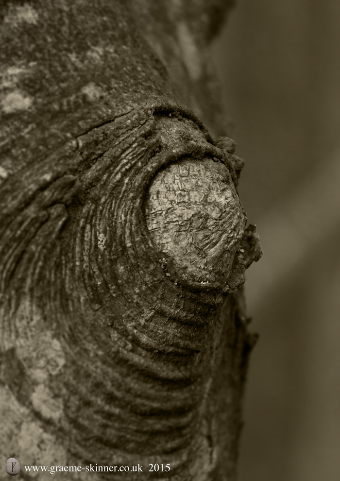 Tree detail V