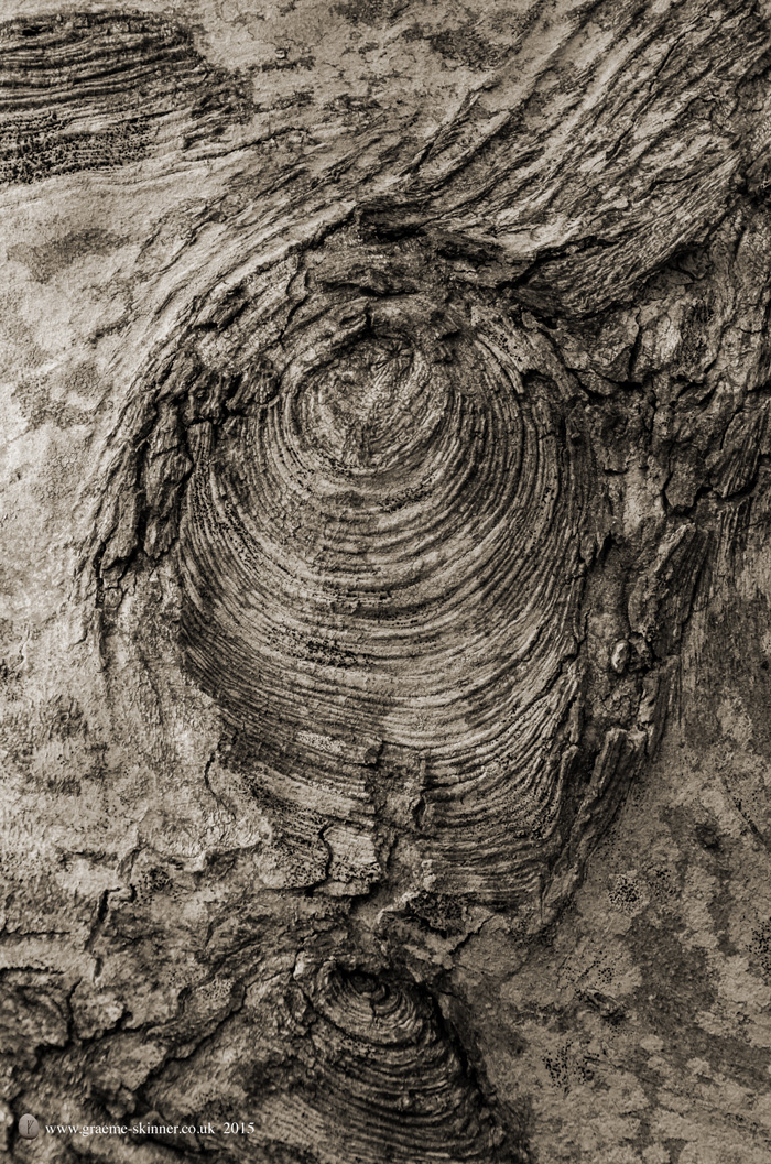 Tree detail VI