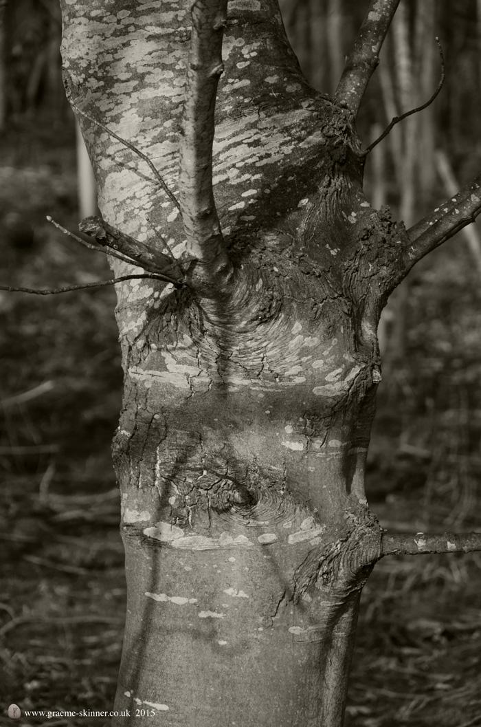 Tree detail VIII