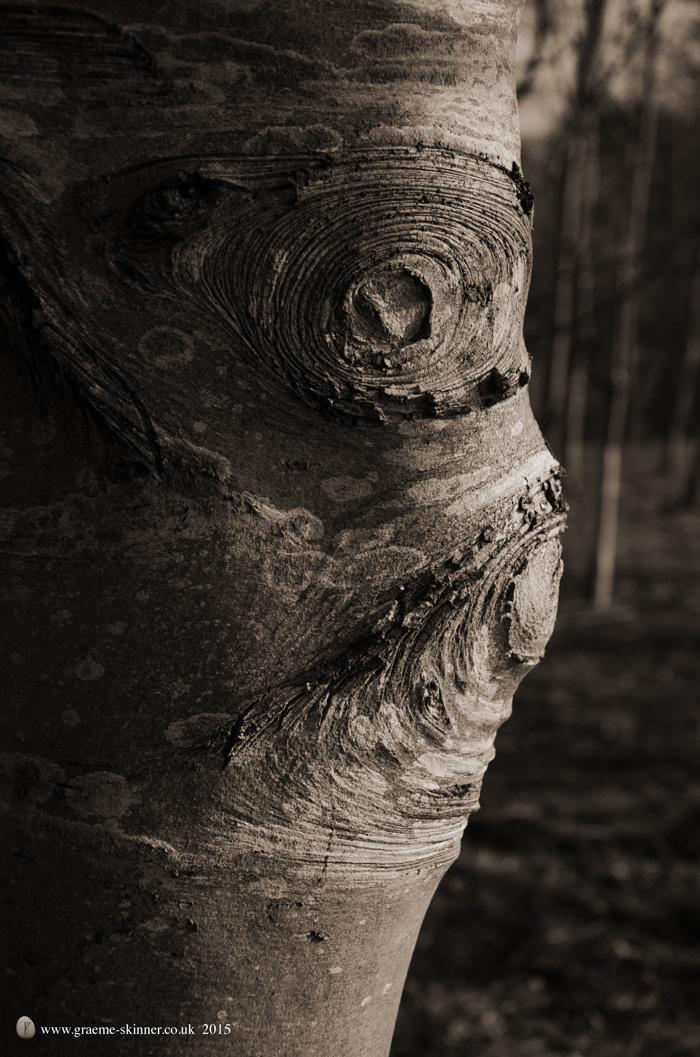 Tree detail IX